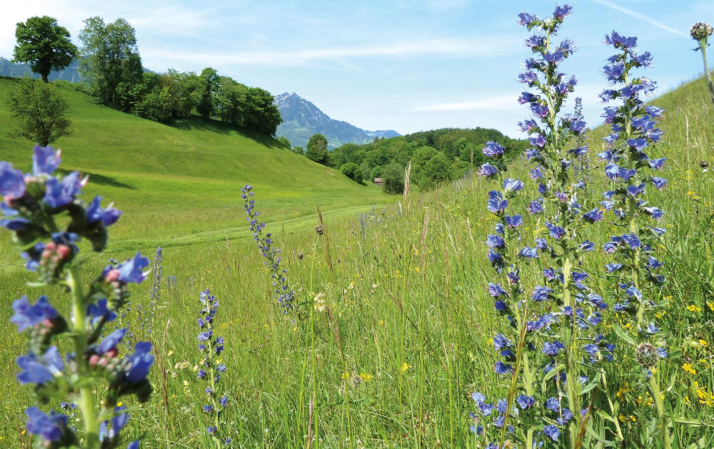 """Im Marmorsaal des Lebensministeriums in Wien wurde seine zwei Hektar große Wiese auf """"Quadres"""" - etwas oberhalb des Bludescher Ortszentrums - zur schönsten Blumenwiese Vorarlbergs gekürt. Dort beginnt jetzt die nächste Blüh-Saison."""